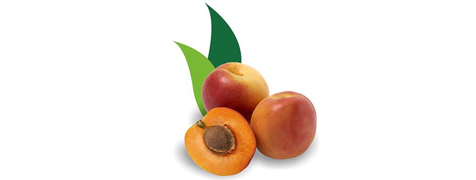 apricotBig